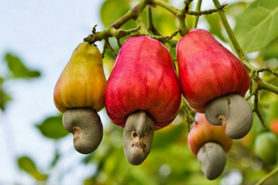 You never thought about how these foods grow | The Chive
