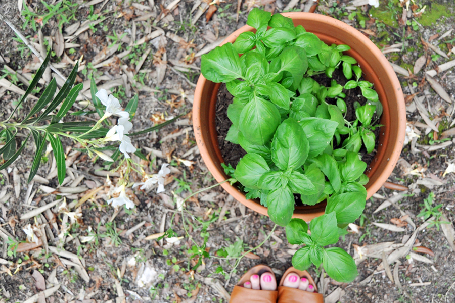 Vacation rental home cooking tip: Invest in potted herbs you'll use all week. It tastes better and you'll save money!