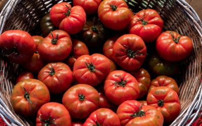 How to use up overripe tomatoes – and bruised ones too! 4 delicious ideas.