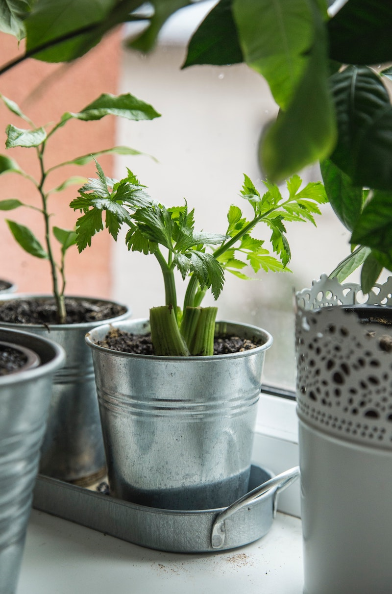 Vegetables you can regrow at home: Celery