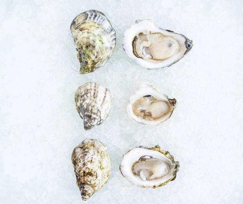 Romantic Valenine's food gifts: Fresh oysters delivered to your home, from Island Creek Oysters