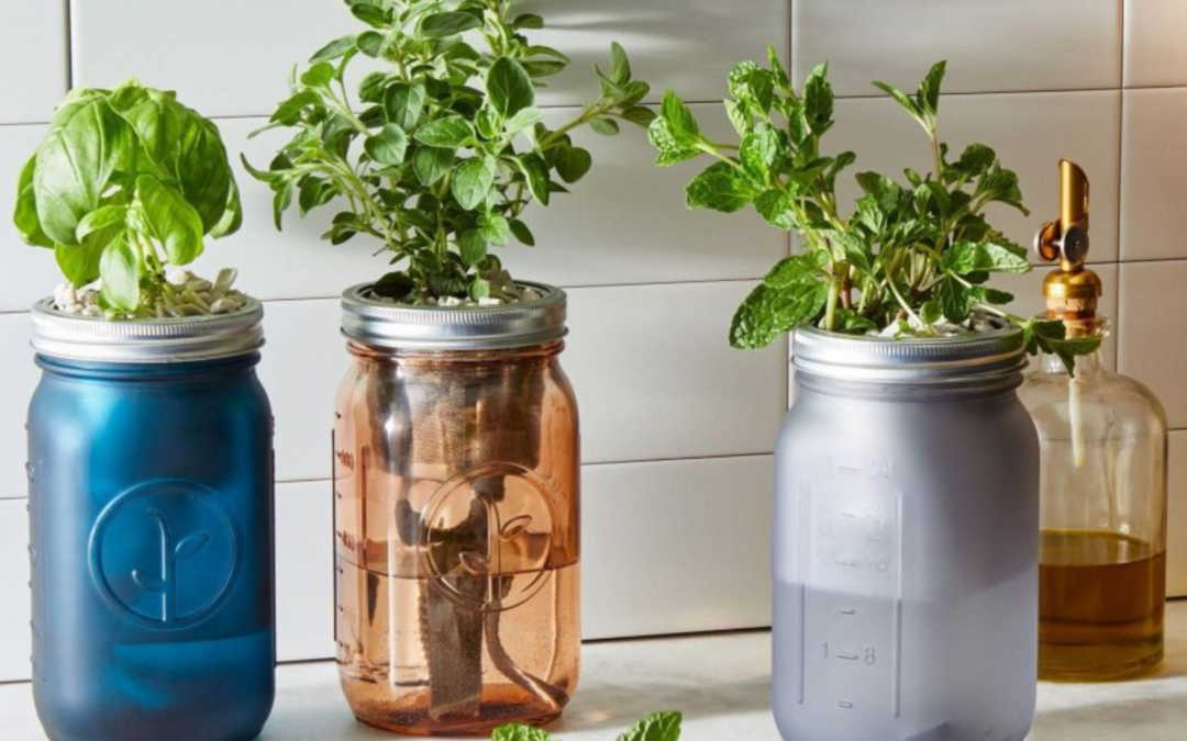 5 clever ways to start an indoor herb garden