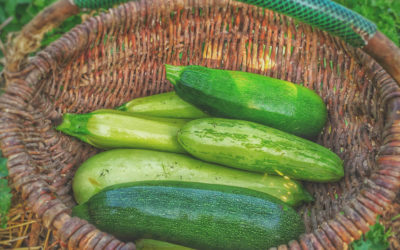 5 meals that feature the summer bounty of zucchini   2021 meal plan ideas #30