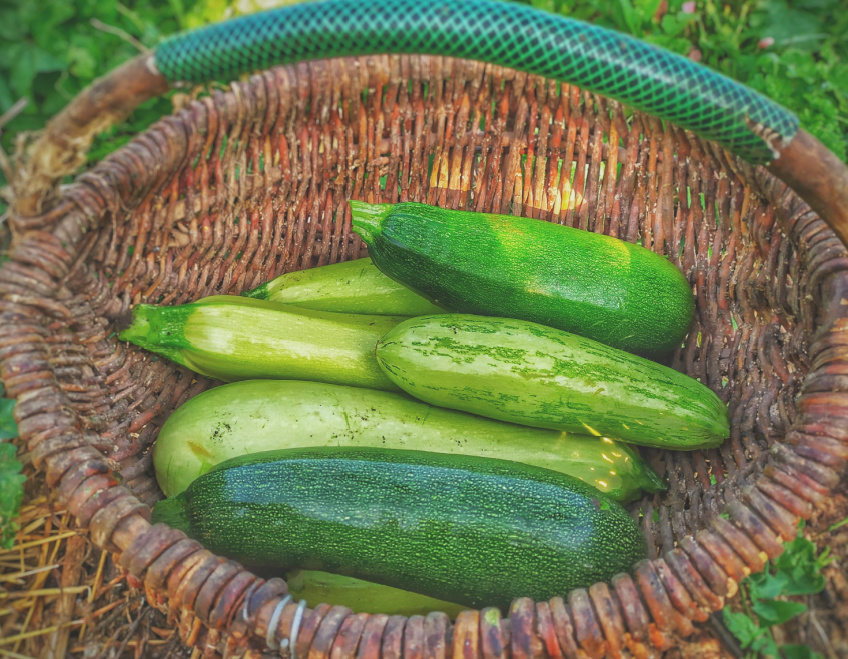 5 meals that feature the summer bounty of zucchini | 2021 meal plan ideas #30
